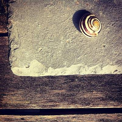 Texture Photograph - The Snail by Nic Squirrell