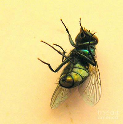 Swatting Fly Photograph - The Snooze by Joe Jake Pratt