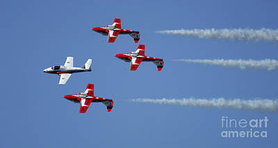 Photograph - The Snowbirds Playing It Cool by Bob Christopher