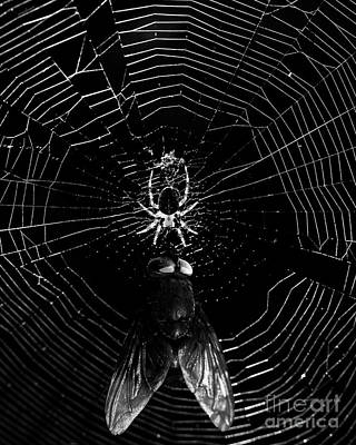 The Spider And The Fly . Black And White Art Print by Wingsdomain Art and Photography