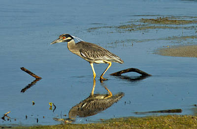 Photograph - The Heron Stalker by Jean Noren
