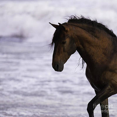 The Stallion And The Ocean Art Print by Carol Walker