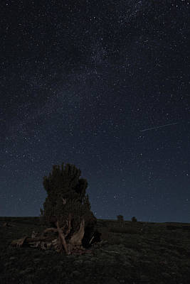 Photograph - The Stars Of Coyote by Nolan Nitschke