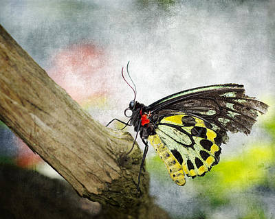 The Stillness Of A Butterfly Art Print by Laura George