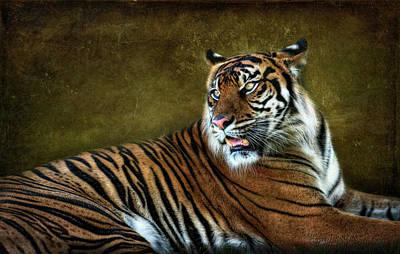 Photograph - The Sumatran Tiger  by Saija  Lehtonen