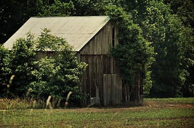 Photograph - The Summer Barn by Rebecca Sherman