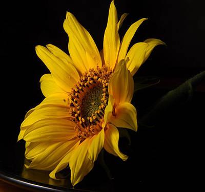 The Sun Flower  Art Print by Davor Sintic