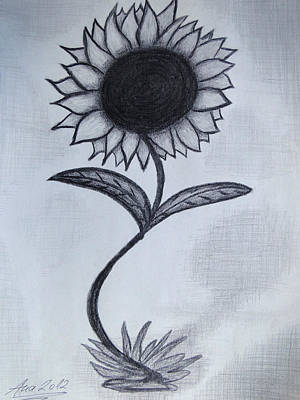 Drawing - The Sunflower  by Ana Leko Nikolic