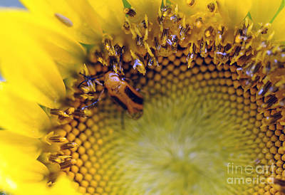 Photograph - The Sunflower And The Bug ... by Nancy Greenland