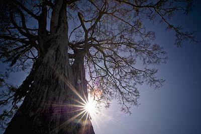 The Sunlight Shines Behind A Tree Trunk Print by David DuChemin