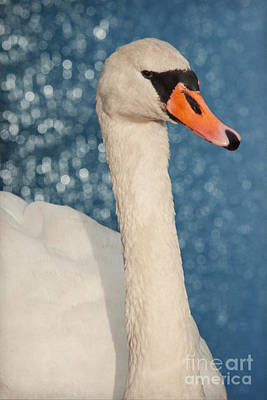 Swan Mixed Media - The Swan by Angela Doelling AD DESIGN Photo and PhotoArt