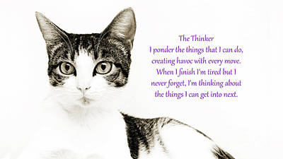 Kitty Photograph - The Thinker Purple by Andee Design