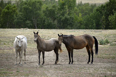 Photograph - The Three Amigos by Ken Smith