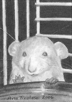 Drawing - The Timid Rat - Aceo by Ana Tirolese