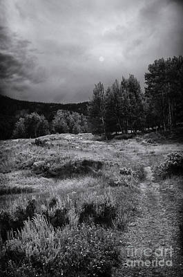 The Trail Art Print by David Waldrop