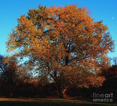 Art Print featuring the photograph The Tree Of Life by Davandra Cribbie