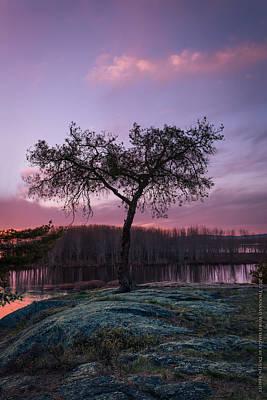 Cs5 Photograph - The Tree Of Life by Dustin Abbott