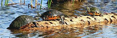 Photograph - The Turtle Log by Ira Runyan
