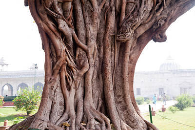 The Twisted And Gnarled Stump And Stem Of A Large Tree Inside The Qutub Minar Compound Art Print by Ashish Agarwal