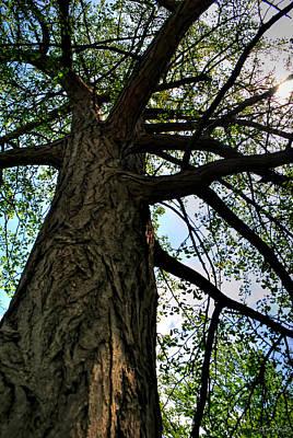 Owls - The Very BIG Tree by Michael Frank Jr