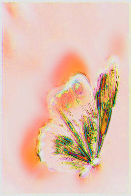 The Vibes Of A Butterfly's Mind Art Print by Li   van Saathoff