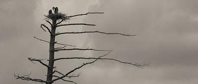The Vulture Tree Art Print by Artist Orange