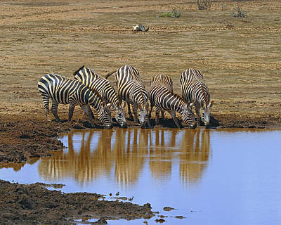 Photograph - The Watering Hole by Tony Beck