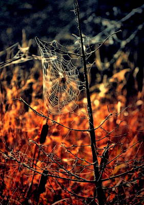 Photograph - The Web by Emily Stauring