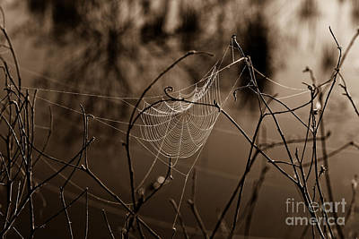 The Web Art Print by John Stanisich