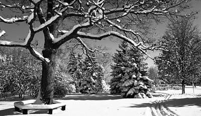 Winterscape Black And White Photograph - The Wedding Tree by John  Bartosik