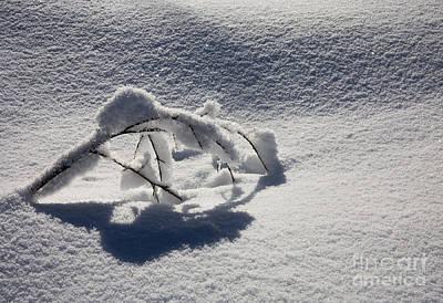 The Weight Of Winter Art Print