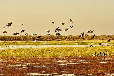 Top-end Photograph - The Wetlands by Douglas Barnard