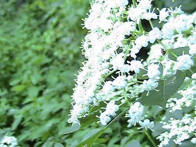 The White Bloom Art Print by Rachel Snell