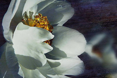 Photograph - The White Of Summer by Florin Birjoveanu