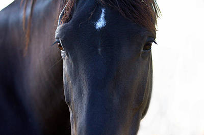 Photograph - The Wild Mustang by Elizabeth Hart