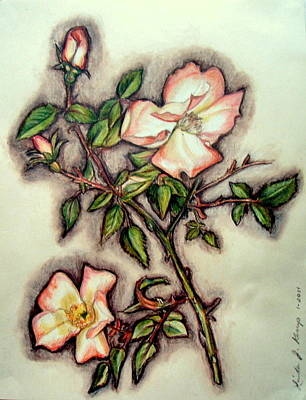 Drawing - The Wild Rose by Linda Nielsen