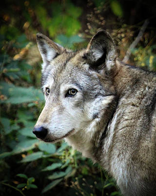 Art Print featuring the photograph The Wolf by Steve McKinzie