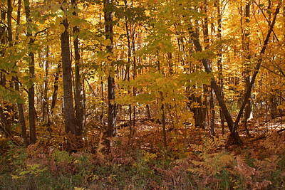 Photograph - The Woods In Autumn by Ron Read
