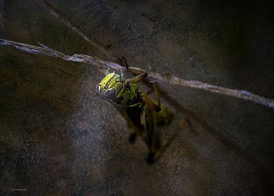 Grasshopper Digital Art - The World Below by Ron Jones