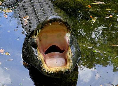 Photograph - The Yawn by Judy Wanamaker