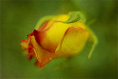 The Yellow Rose Art Print by Diane Dugas