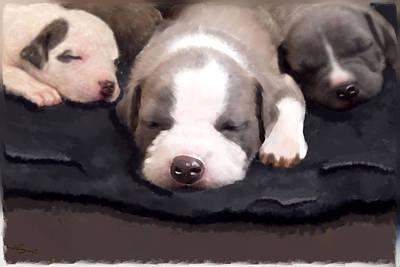 They Call It Puppy Love Art Print by Angel Pachkowski