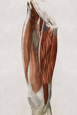 Thigh Nerves Art Print by Sheila Terry