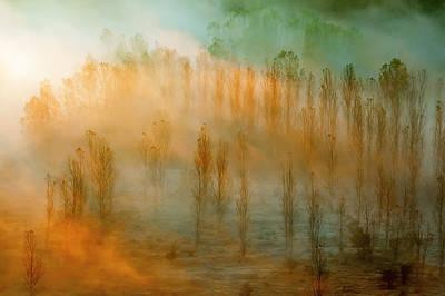 Thin Forest Art Print