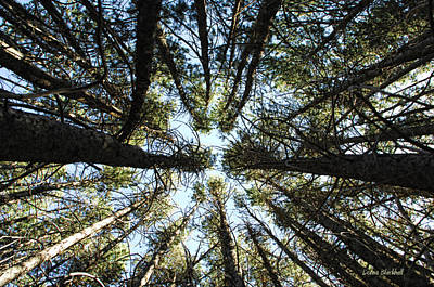 Photograph - Things Are Looking Up by Donna Blackhall