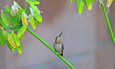 Garden Photograph - Things Are Looking Up by Lynn Bauer
