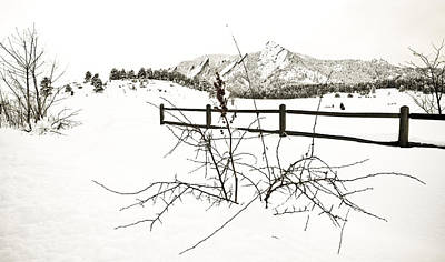 Snowing Photograph - Things That Grow In The Foreground by Marilyn Hunt