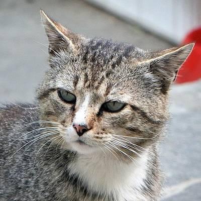 Still Life Photograph - Thinking Cat by Chi ha paura del buio NextSolarStorm Project