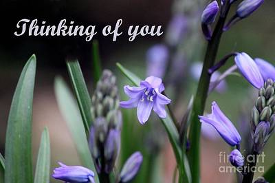 Photograph - Thinking Of You by Erica Hanel
