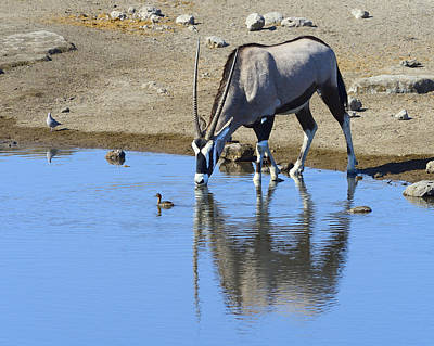 Photograph - Thirsty by Tony Beck